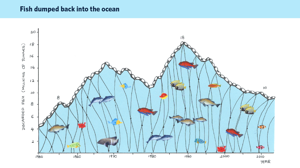 declining fish stock term papers Effects of fish stocking on ecosystem services: an overview and case study using the  also often referred to as fish stock  and to declining fish.