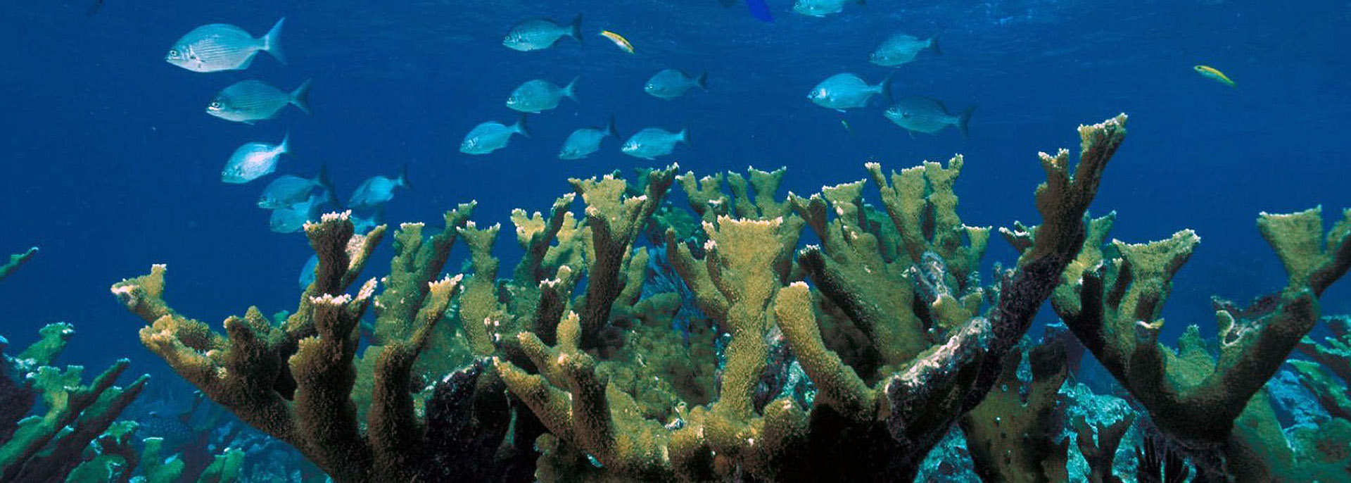 Fish of the oceans: a selection of sites